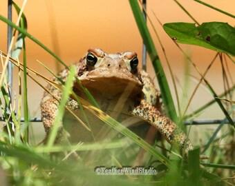 Toad Photo | Nature Photography | Nursery Decor | Kids Classroom Art | FeatherWindStudio | Eastern Toad | Amphibian Wall Art | Toad Print