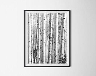 Birch Tree Print / Black and White Print / INSTANT DOWNLOAD / Printable Home Decor / Nursery / Modern Decor / Monochromatic Nature Print