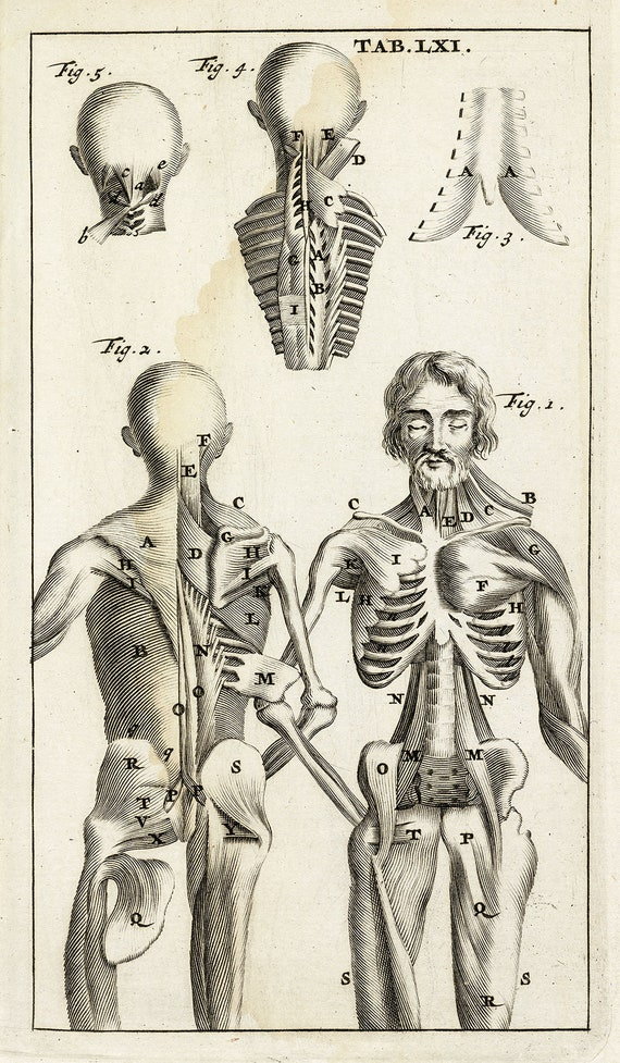 Steven Blankaart : Anatomia Reformata Tab LXI