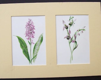 Vintage Orchid illustrations, Mounted in cream duo matte