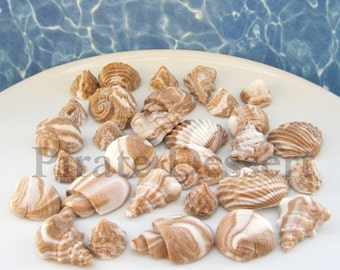 100 Beach Wedding Favor Candies - Small size Chocolate SEA SHELLS -  Edible cake decorations - Beach Wedding (Brown and White)(100 Pieces)