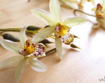 Apple Green Cymbidium Orchids Flower Heads (FB0036-03-H) | silk flower – artificial flower – flower crown – orchid wreath – bouquet  – bride