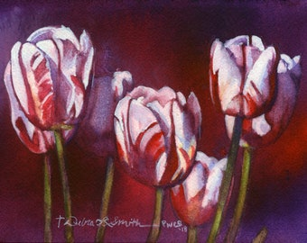Candy Striped Tulips