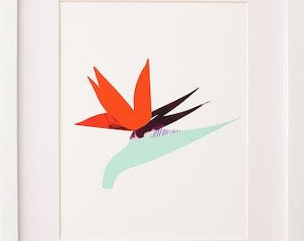 Bird of Paradise Fine Art Print