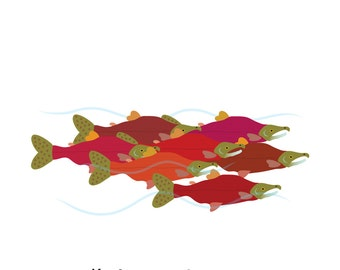 Salmon (4x4)