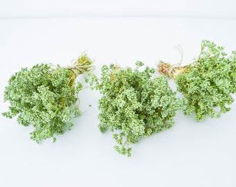 Bouquet, dry plant, green branches, minibuquet filler, home decoration, natural materia