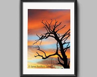Sunrise and Tree, Erddig, an Erddig Countrypark Woodland Landscape Photograph.