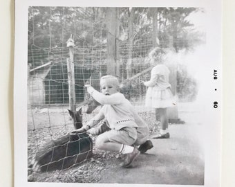 Original Vintage Photograph | Petting Zoo