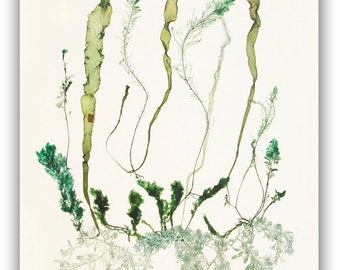 Pressed Seaweed art, MADE TO ORDER, seaweed pressings, Natural Sea fan collage, seaweed pressing,  beach cottage decor, victorian botanicals