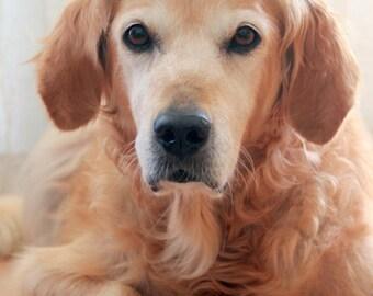 Dog Crown, Pet Crown, Crown for Dogs, Dog Tiara, Pet Tiara, Dog Princess Crown, Dog Queen Costume, King Crown for Dogs, Dog Hat, Dog Costume