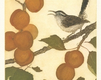 Bewick's Wren in the Apricots, Original Etching