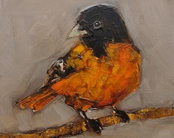 BALTIMORE ORIOLE BIRD Colette W. Davis 4x4 Art Giclee print
