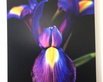 The Dancing Iris print on Canvas