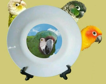 "Severe Macaw Chestnut-fronted Macaw Parrot Blue Sky Clouds White Decorative Ceramic 8"" Plate and Display Stand"