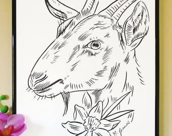 Goat and Daffodil Art Print