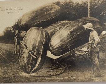 Exaggeration Real Photo Postcard W. H. Martin Giant Watermelons