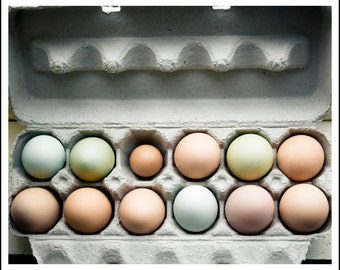 Food photography - Farm Fresh - 8x10 kitchen art print - one dozen organic free-range eggs photo Farmers market shabby chic