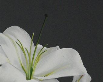 Lily Flower Painting - White Stargazer Lily Macro Botanical Floral Wall Art Country Home Decor