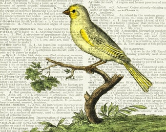 yellow canary page print