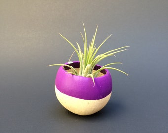 Air Plant Pod - purple top