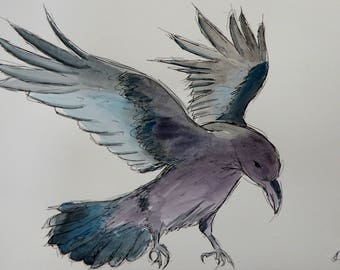 Raven in Flight Original Watercolour and Ink Sketch