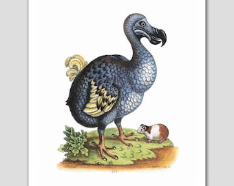 "Dodo Bird Art, Bird Print (Blue Home Decor, Bird Folk Art, Primitive Print) -- ""Extinct Dodo and the Guinea Pig"" 18th Century Artist"