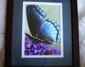 Blue Butterfly  8x10 Frame, double matted in Blue and White; Item #6647