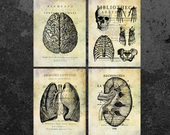 Vintage Anatomy Set Brain Lungs Skull Kidneys Print Medicine Old Book Medicine Print Anatomical Print Doctor Office Art Clinic Wall Decor