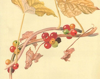 Antique Print, English Berries leaves, Edwardian chart beautiful wall art vintage color flowers lithograph illustration 1970 garden