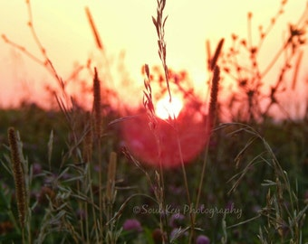 CANVAS SUNSETS, Golden Hour, Golden Hour Sunsets, Wildflowers, Country Sunsets, Prairie Sunsets, Iowa Sunsets, Sunshine, Sunset, Rural, Iowa