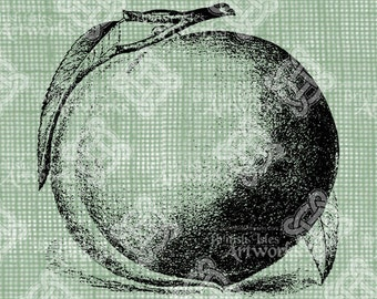 Digital Download Peach digi stamp, digis, digital stamp, Peaches, Antique Illustration, Fruit