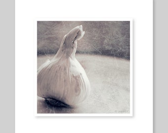 Garlic Still Life - 8x10 Fine Art Photograph