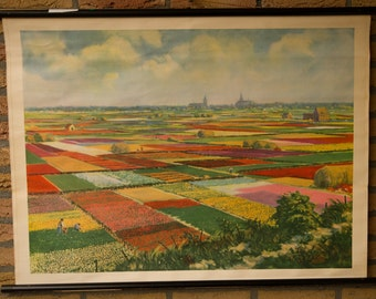 Vintage  Pull Down Chart Flowerfields in the Netherlands   School Chart
