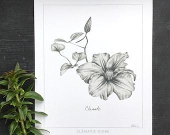 Clematis Botanical Print