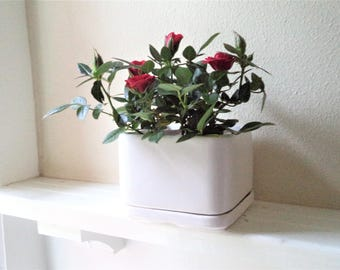 Simple square planter, off white succulent pot, planter with drip plate, modern flower pot