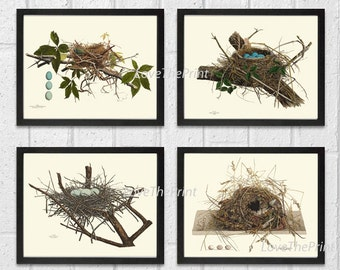 Bird Nest Print Set of 4 Beautiful Blue White Eggs Antique Forest Nature Tree Home Bedroom Living Room Hallway Room Wall Decor to Frame