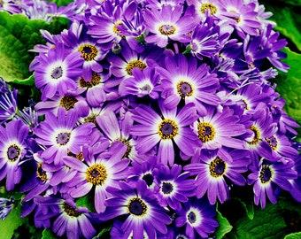 Purple digital print