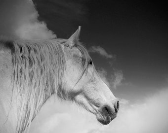 White horse photo, horse photography, black and white horse photo, equine art, nursery decor, various sizes