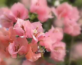 Bougainvillea Photograph- Flower Photography, Pink Bougainvillea Print, Floral Wall Art, Botanical Print, Nature Photography, Spring Flowers
