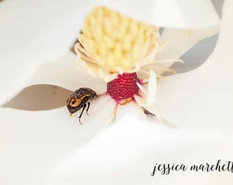 Bug Art, Nature Photography, Nature Art, Bug on a Magnolia, Bug Print, Insect art, insect print, Magnolia Flower, Magnolia Art, Wall Art