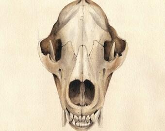 Ursus Arctos Skull. Art print