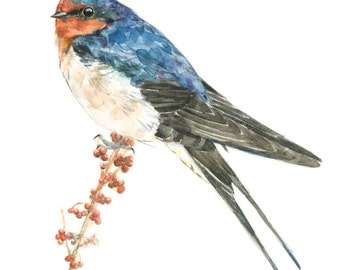 Barn Swallow watercolor painting - bird watercolor painting - 5x7 inch print - 0057