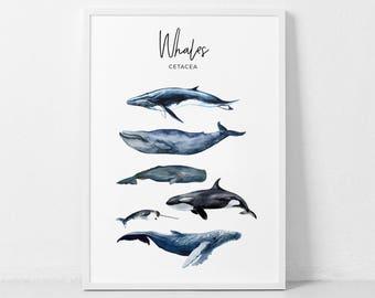 Whales Watercolor Print, Whale Print, Whale Cetacea Poster, Whale Art, Cateceans Prints, Marine Art , Kids room decor, Whale Wall Art