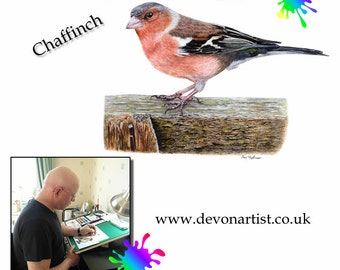 Learn to Paint lesson in Watercolour and Acrylic - Chaffinch Bird - PDF instant art download - 11 Pages - Bird Painting Tutorials