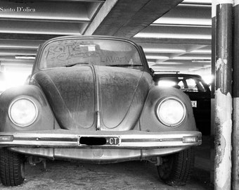 The beetle photography vintage photos Black and white
