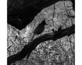 Bird In Shade
