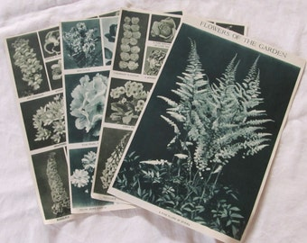 """vintage FLOWER EPHEMERA -- salvaged from a 1913 """"Book of Knowledge"""" (8 pages/4 sheets)"""