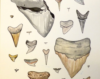 Sharktooth Watercolor Painting
