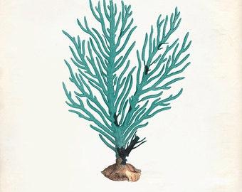Vintage Green Sage Sea Coral on Antique Ephemera Print 8x10 P275