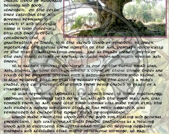 ASH Tree MAGIC Properties, BOS Instant Download Page, WaND, Bark Scrolls, Book of Secrets, Glamerie Pages